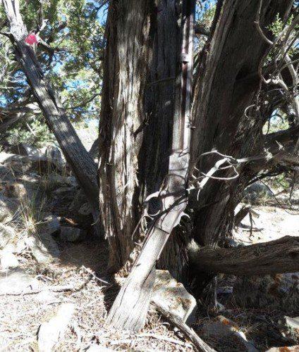 Un Winchester 1873 olvidado durante 130 años