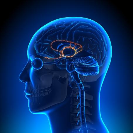 cerebro primitivo